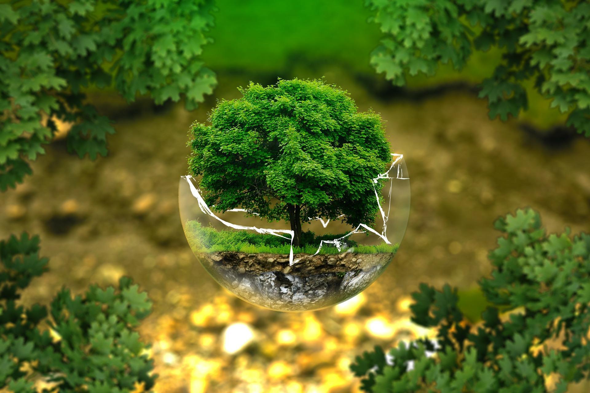 5 zrównoważonych postanowień